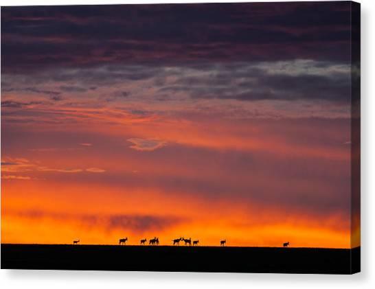 Rhinocerus Canvas Print - Topi Herd Sunrise by Mike Gaudaur