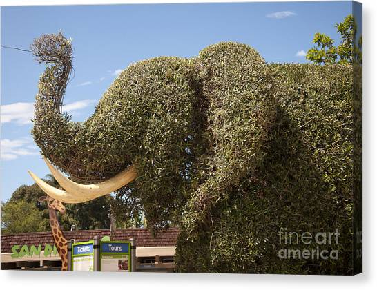 Topiary Elephant Canvas Print