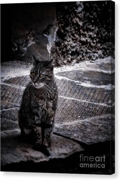 Tortishell Cat Canvas Print