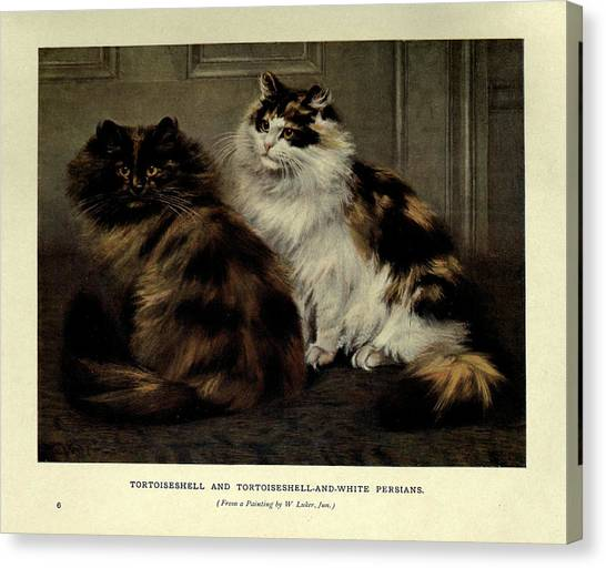 Manx Cats Canvas Print - Tortoiseshell And Tortoiseshell And White Persians by Philip Ralley