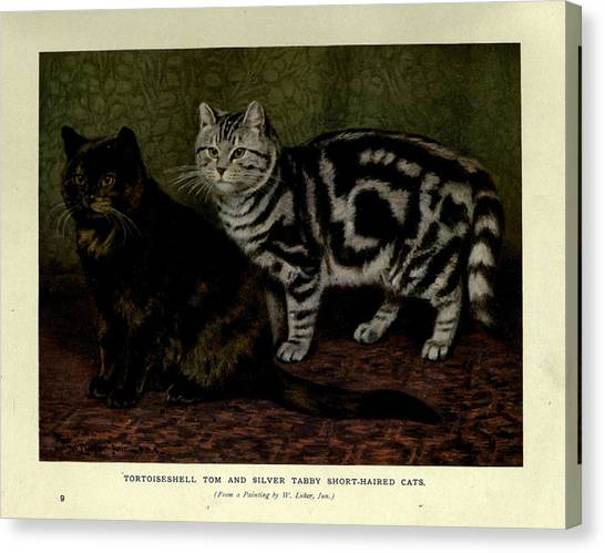 Manx Cats Canvas Print - Tortoiseshell Tom And Silver Tabby Cats by Philip Ralley