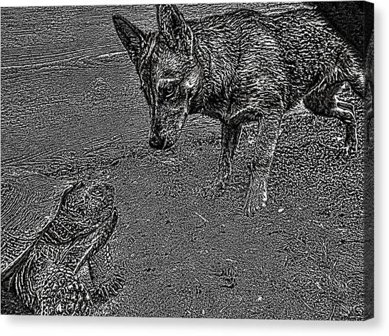 Tortuga Duel Canvas Print