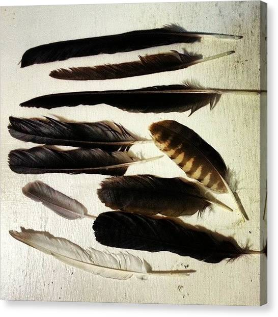 Foul Canvas Print - Totally Scored On My #feather Hunt by Lisa Marchbanks