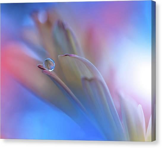 Drops Canvas Print - Touch Me Softly... by Juliana Nan