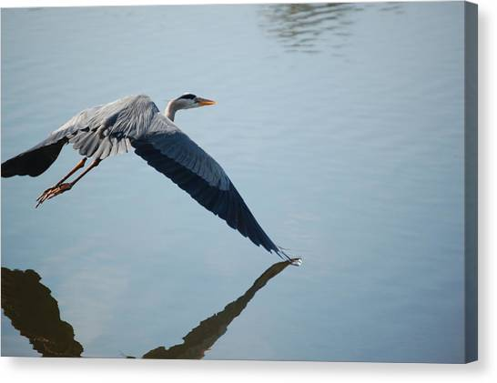Touch The Water With A Wing Canvas Print