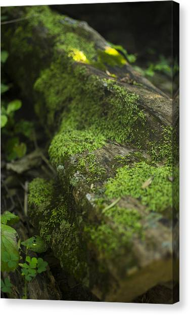 Touched By Nature Canvas Print by Michael Williams