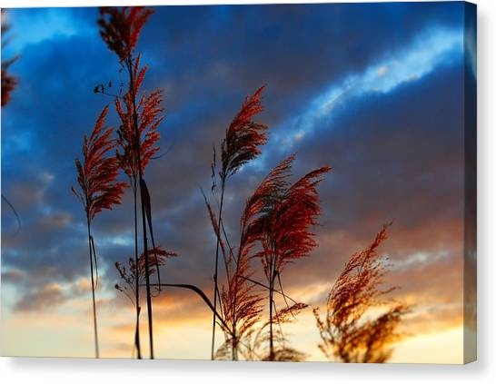 Touched By The Sunset Canvas Print