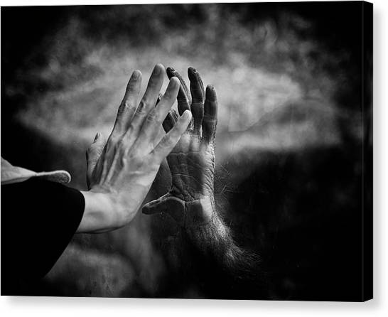Orangutan Canvas Print - Touching by David Williams