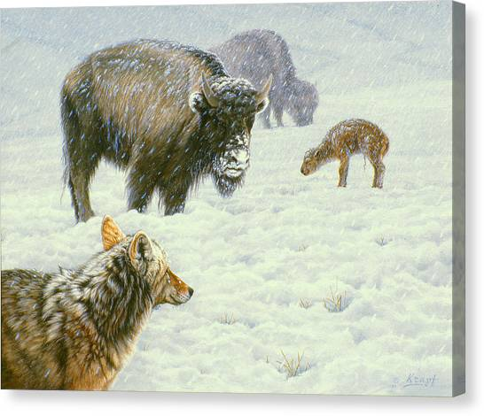 Buffaloes Canvas Print - Tough Day In May by Paul Krapf