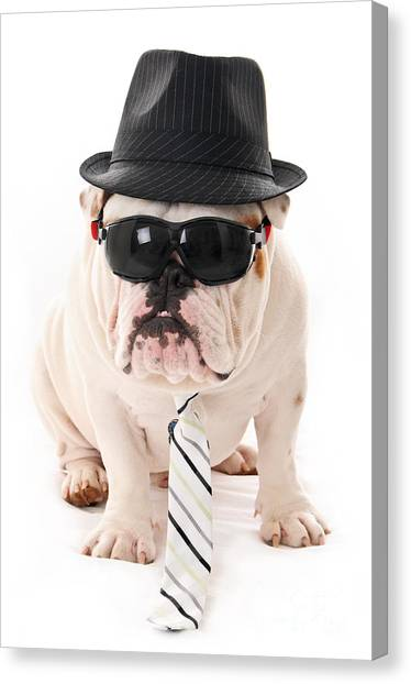English Bull Dogs Canvas Print - Tough Dog by Jt PhotoDesign