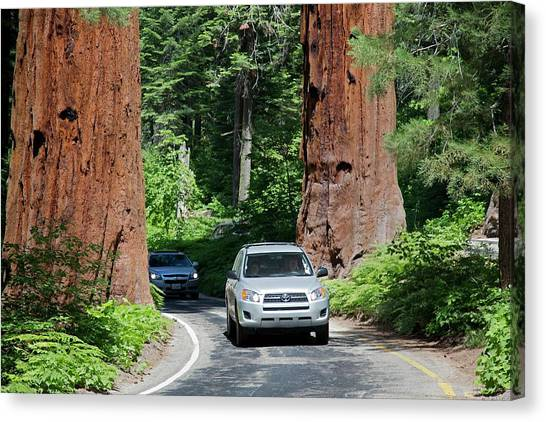 Toyota Canvas Print - Tourism In Sequoia National Park by Jim West