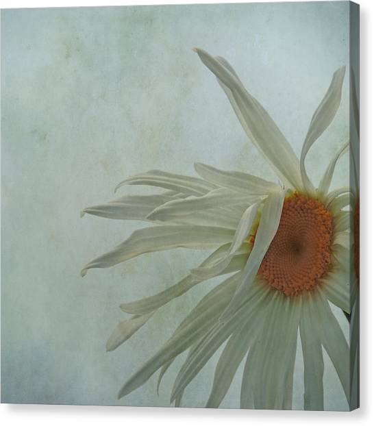 Tousled  Canvas Print