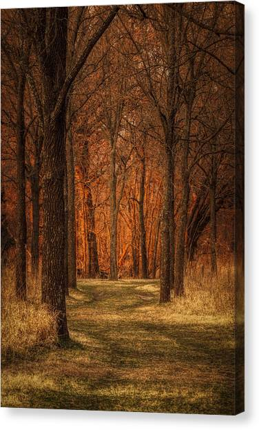 Nature's Cathedral Canvas Print