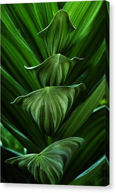 Tower Of Green Canvas Print by David Marr