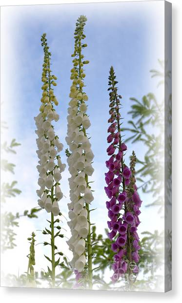 Towering Foxglove Canvas Print