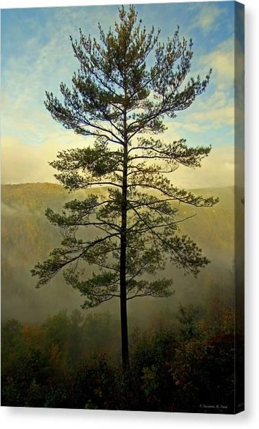 Towering Pine Canvas Print