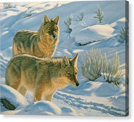 Coyote Canvas Print - Trackers by Paul Krapf