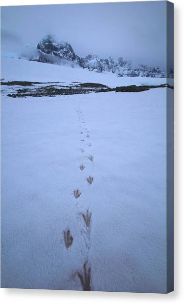 Antarctica Canvas Print - Tracks In The Snow by FireFlux Studios