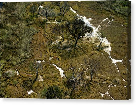 Okavango Swamp Canvas Print - Tracks Made In The Dry Grass by Beverly Joubert