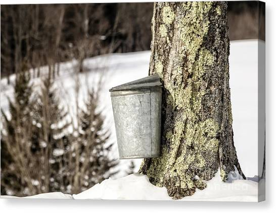 Vermont Canvas Print - Traditional Sap Bucket On Maple Tree In Vermont by Edward Fielding
