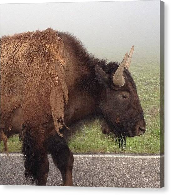 Yellowstone National Park Canvas Print - Traffic by Marisol Amador