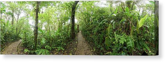 Monteverde Canvas Print - Trail At Monte Verde Cloud Forest by Panoramic Images
