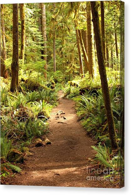Trail Through The Rainforest Canvas Print