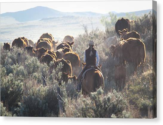 Trailing Cattle Canvas Print