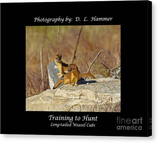 Training To Hunt Canvas Print by Dennis Hammer