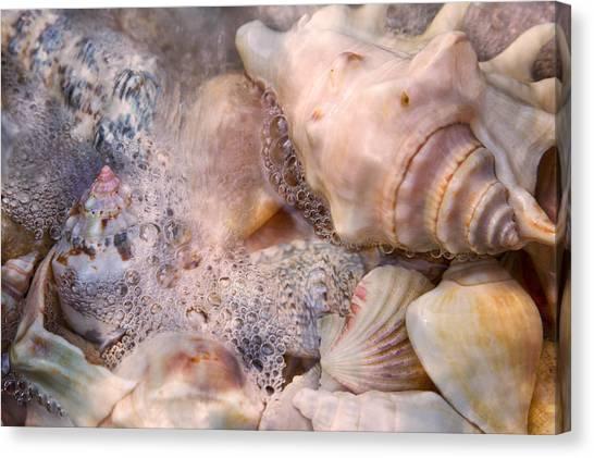 Conch Canvas Print - Tranquil Seashells by Betsy Knapp