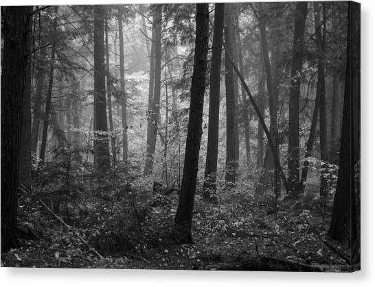 Tranquil Woods Canvas Print by Eric Dewar