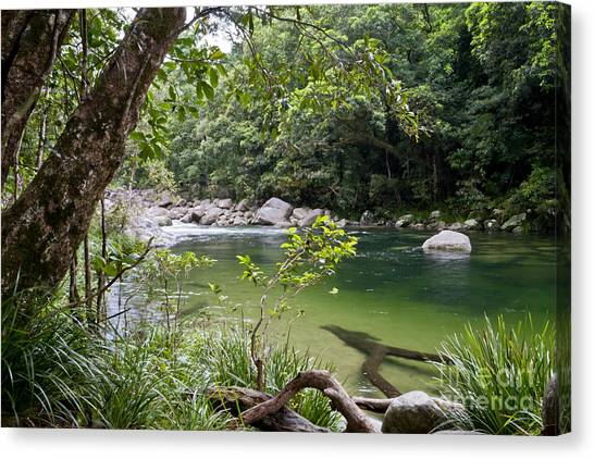 Daintree Rainforest Canvas Print - Tranquility by F Innes - Finesse Fine Art