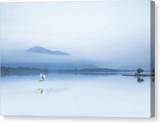 Swans Canvas Print - Tranquility by Kieran O Mahony