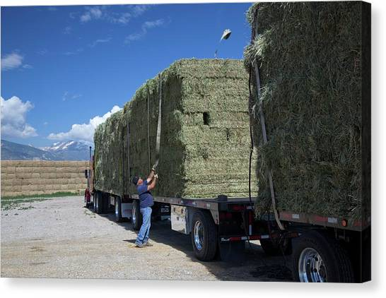 Hay Bales Canvas Print - Transporting Bales Of Hay by Jim West