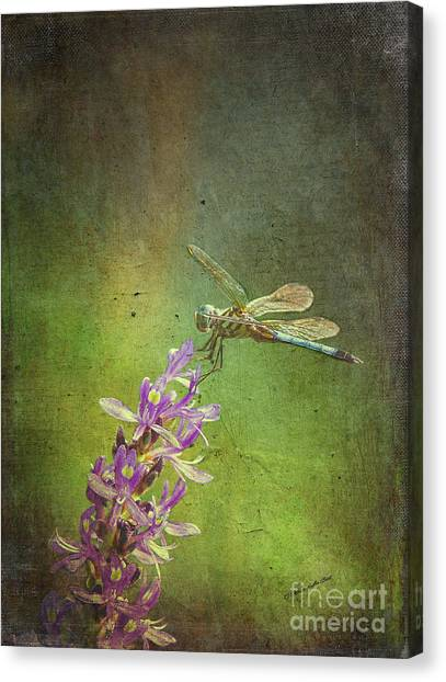 Treading Lightly Canvas Print