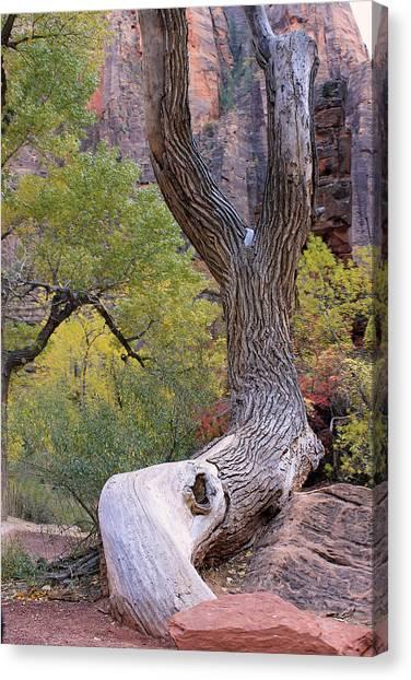 Tree @ Zion National Park Canvas Print