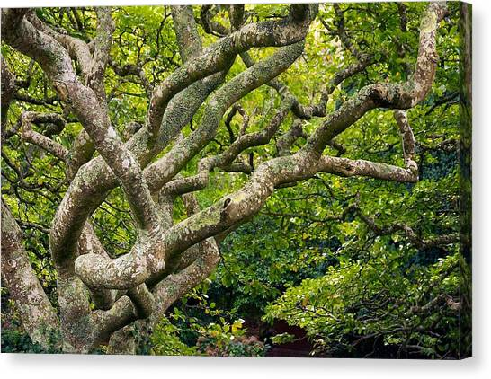 Tree #1 Canvas Print