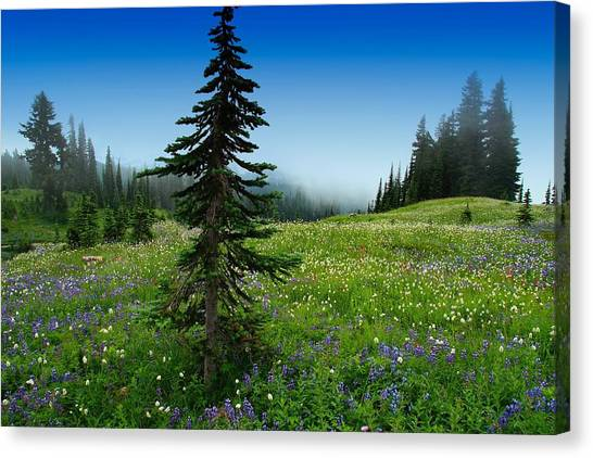 Tree Amongst Wildflowers Canvas Print