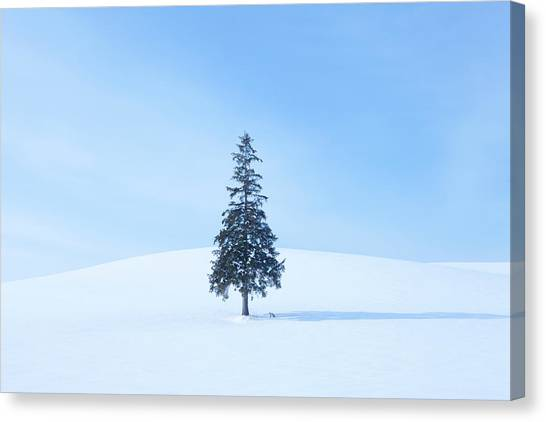 Tree And A Fox In Snow Field Canvas Print