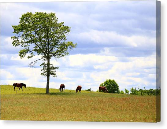 Tree And Horses Canvas Print