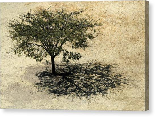 Tree And Shadow At Monte Alban Canvas Print