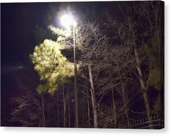 Tree And Streetlight  Canvas Print