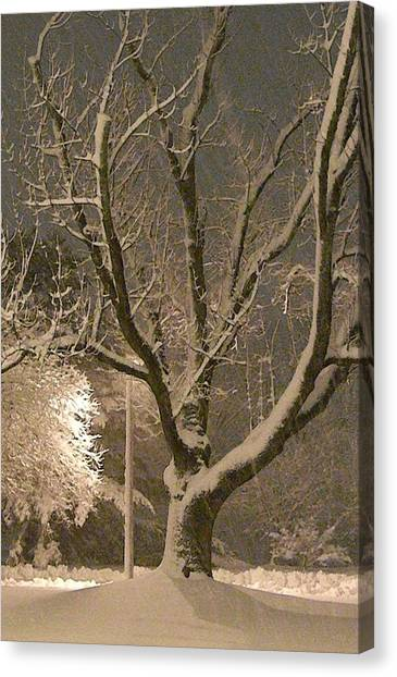Tree At Night Canvas Print