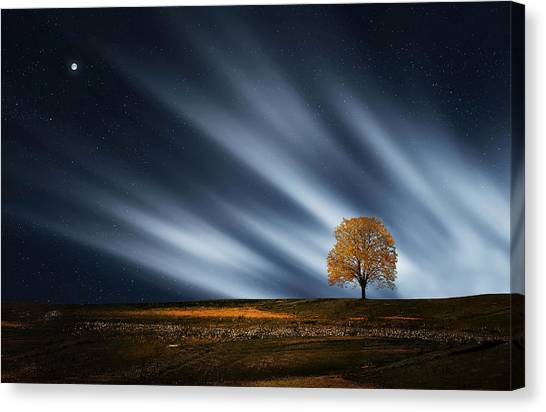 Tree At Night With Stars Canvas Print
