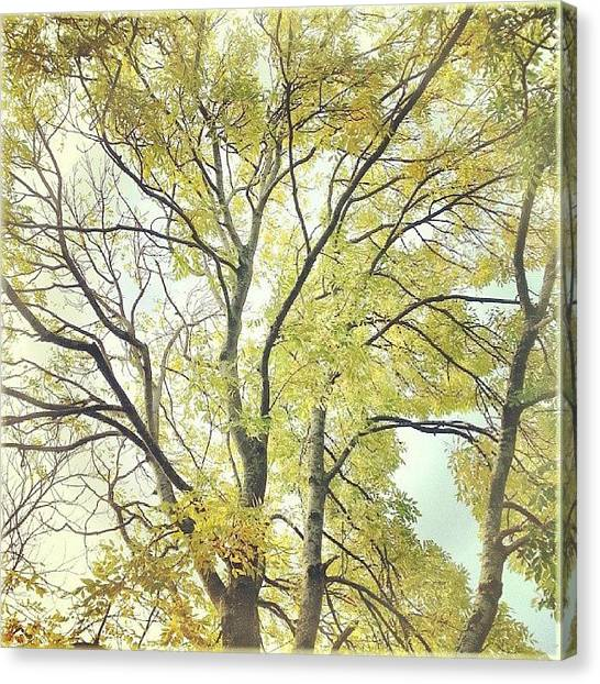 Ashes Canvas Print - #tree #autumn #fall #artishfolk by Alexandra Cook