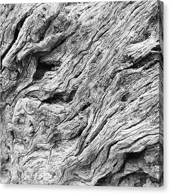 Arizona Canvas Print - Tree Bark by Ryan Hoffman