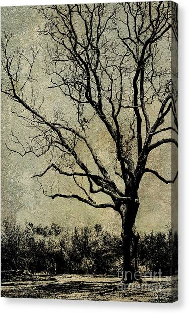 Tree Before Spring Canvas Print