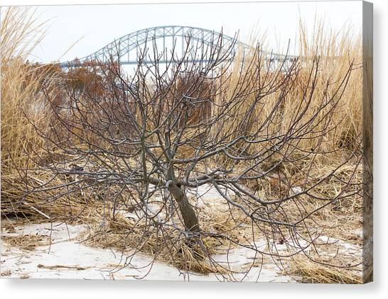 Tree By Captree Bridge Canvas Print