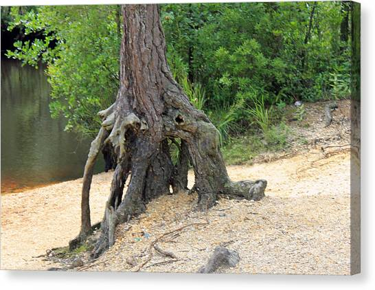 Tree By River Canvas Print