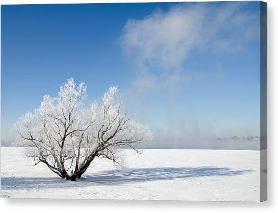 Tree By The River Covered With Hoar Frost. Canvas Print